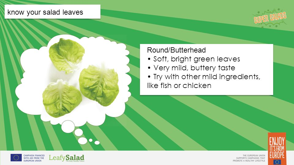 t t t t know your salad leaves Round/Butterhead Soft, bright green leaves Very mild, buttery taste Try with other mild ingredients, like fish or chicken