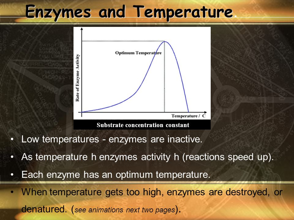 Enzymes and Temperature Enzymes and Temperature. Low temperatures - enzymes are inactive.