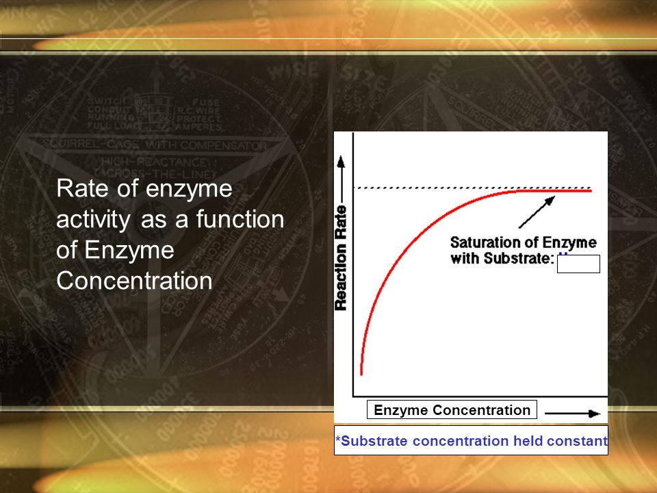 Rate of enzyme activity as a function of Enzyme Concentration *Substrate concentration held constant Enzyme Concentration