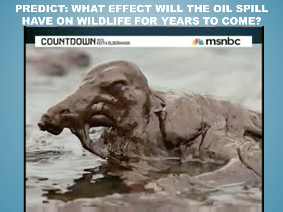 oil spills effect on wildlife essay