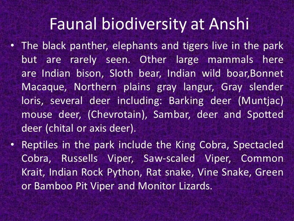Faunal biodiversity at Anshi The black panther, elephants and tigers live in the park but are rarely seen.