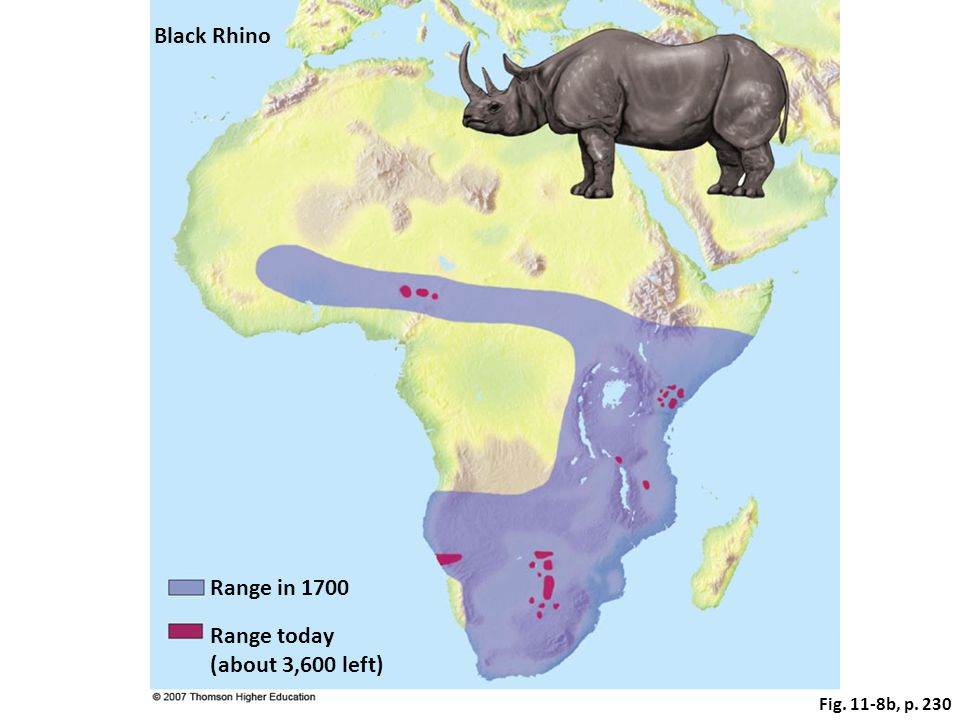 Fig. 11-8b, p. 230 Range in 1700 Black Rhino Range today (about 3,600 left)