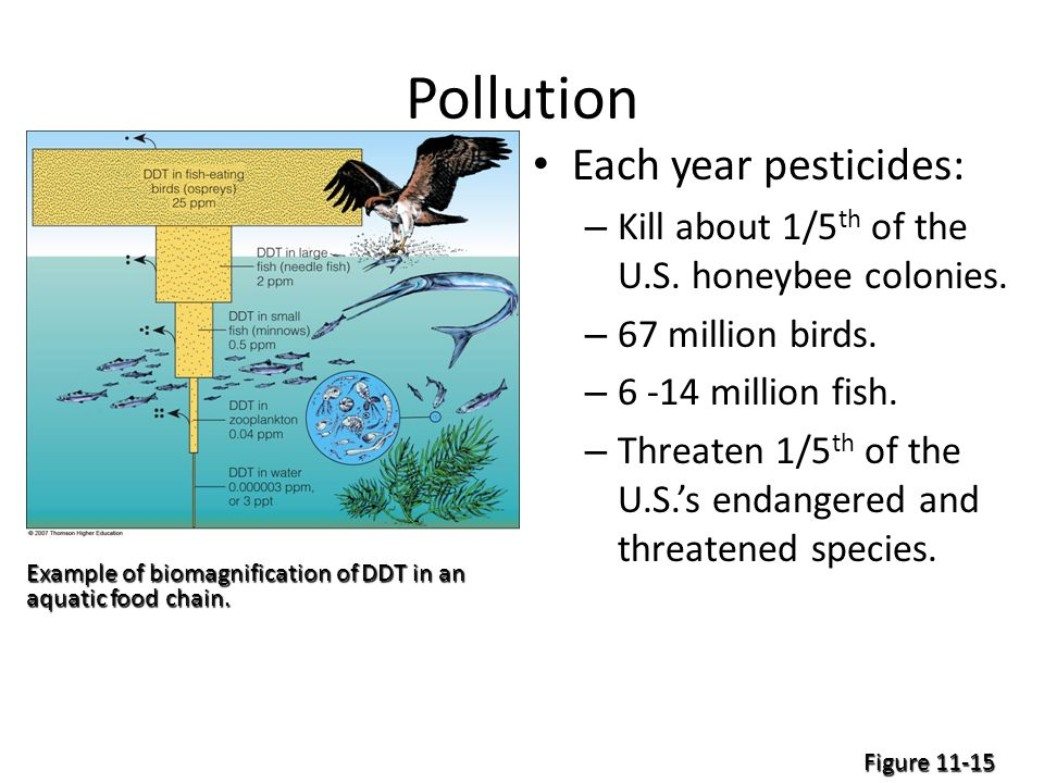 Pollution Each year pesticides: – Kill about 1/5 th of the U.S.