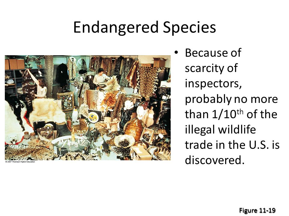 Endangered Species Because of scarcity of inspectors, probably no more than 1/10 th of the illegal wildlife trade in the U.S.