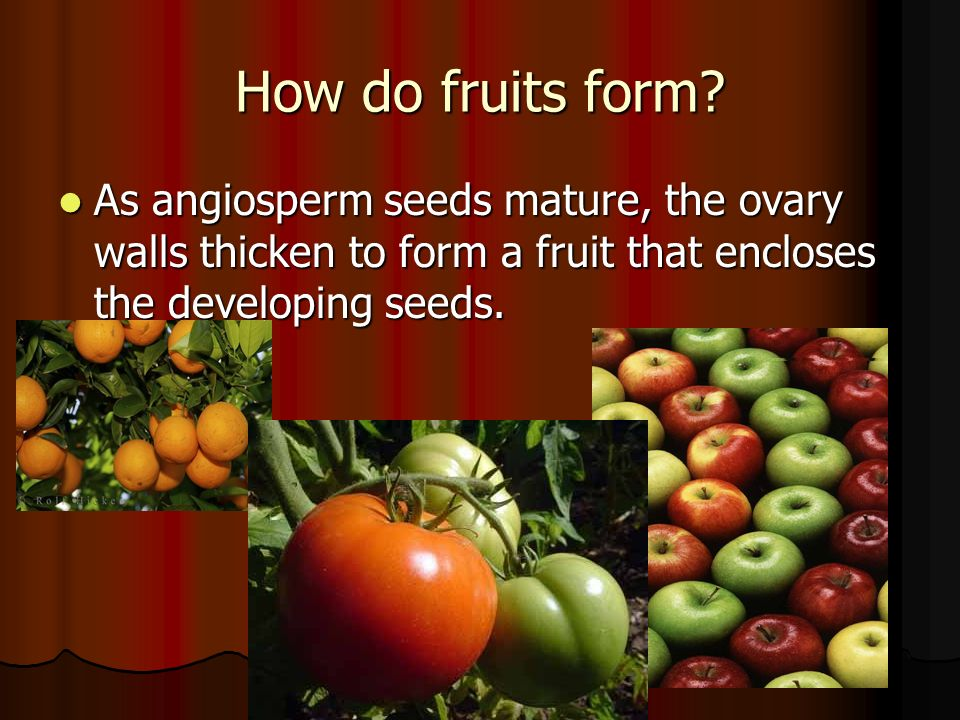 22–1Introduction to Plants A. What Is a Plant? B.The Plant Life ...