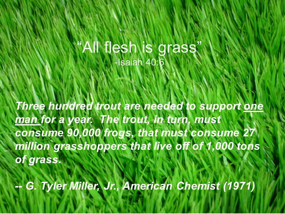 Copyright © 2008 Pearson Education, Inc., publishing as Pearson Benjamin Cummings All flesh is grass -Isaiah 40:6 Three hundred trout are needed to support one man for a year.