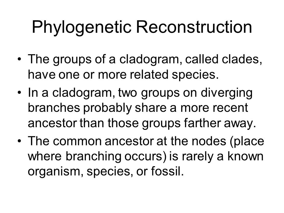 Phylogenetic Reconstruction The groups of a cladogram, called clades, have one or more related species.