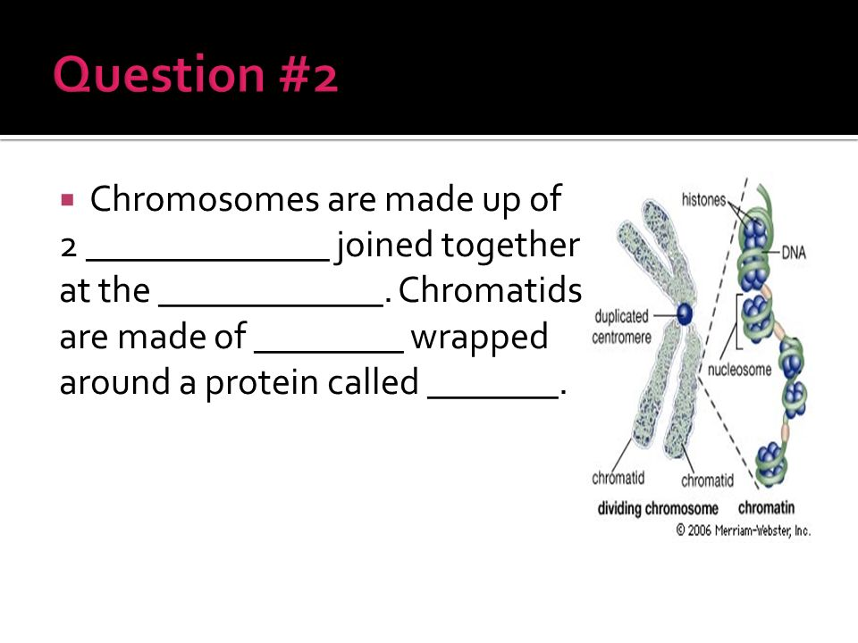 Chromosome Labeled Arms