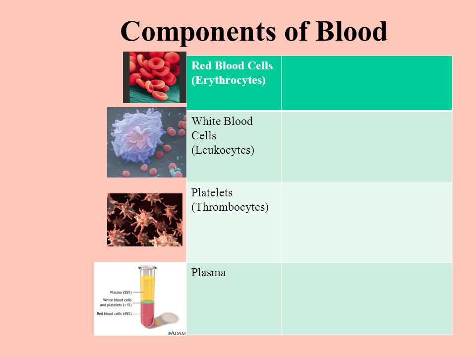 Components of Blood Red Blood Cells (Erythrocytes) White Blood Cells (Leukocytes) Platelets (Thrombocytes) Plasma