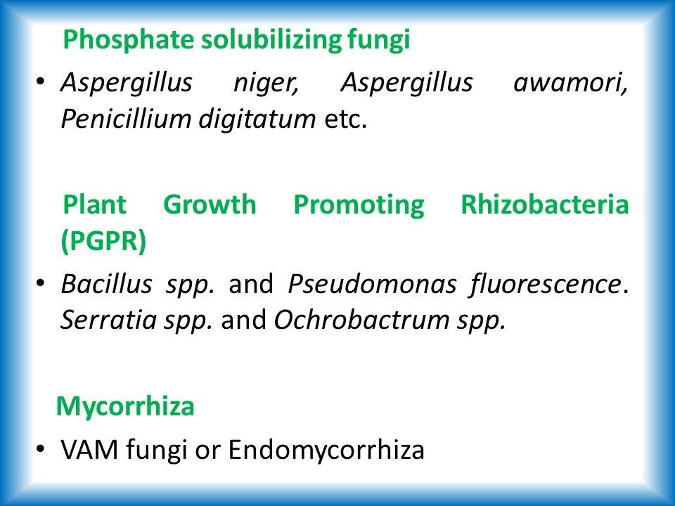 Phosphate solubilizing fungi Aspergillus niger, Aspergillus awamori, Penicillium digitatum etc.