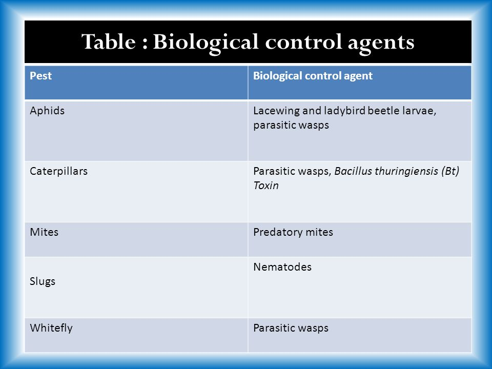 PestBiological control agent AphidsLacewing and ladybird beetle larvae, parasitic wasps CaterpillarsParasitic wasps, Bacillus thuringiensis (Bt) Toxin MitesPredatory mites Slugs Nematodes WhiteflyParasitic wasps Table : Biological control agents