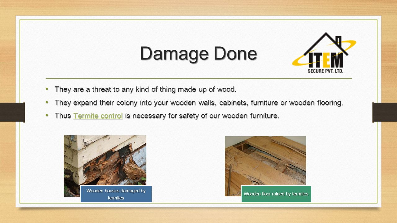 Damage Done They are a threat to any kind of thing made up of wood. ANTI TERMITE TREATMENT  What are Termites  Termites are a group of