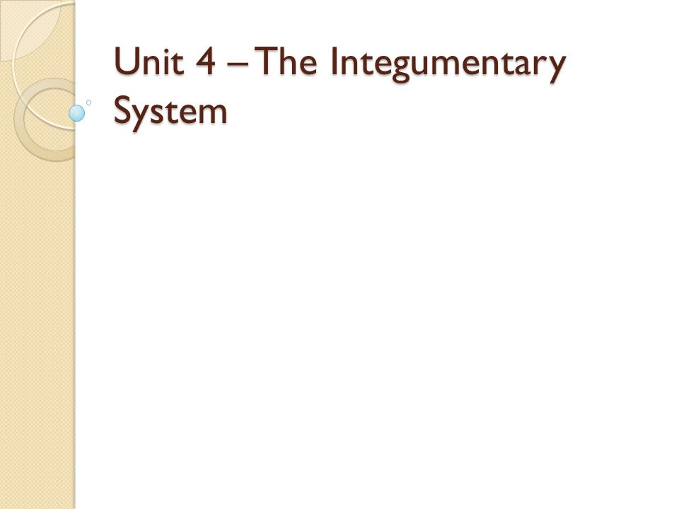 Unit 4 The Integumentary System Integumentary System Also known – Integumentary System Worksheets
