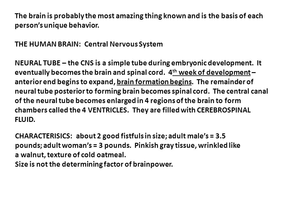 Chapter 12 - Nervous System THE BRAIN ANATOMY & PHYSIOLOGY. - ppt ...