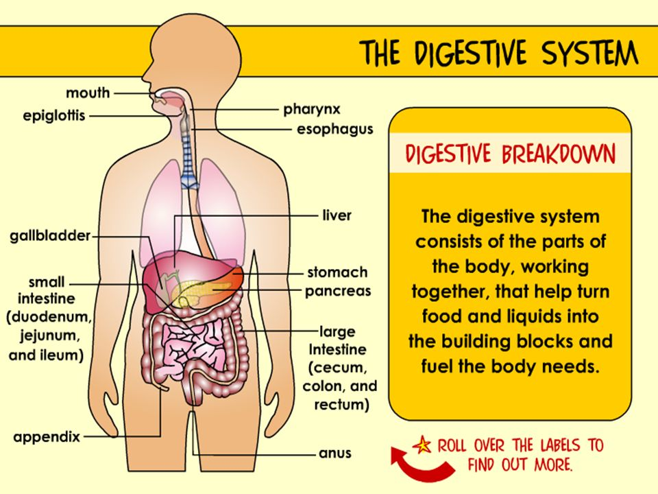 Digestive system main function break food down into small enough 16 gi gastrointestinal tract ccuart Image collections