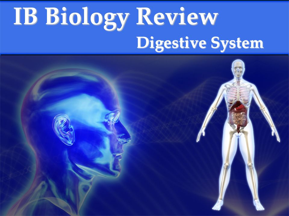 Ib biology review digestive system what are the components of the presentation on theme ib biology review digestive system what are the components of the human digestive system mouth salivary glands esophagus stomach toneelgroepblik Images