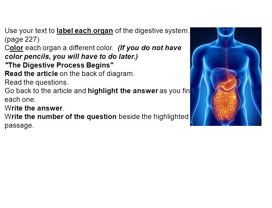 The Different Organs Of The Digestive System Coursework Service