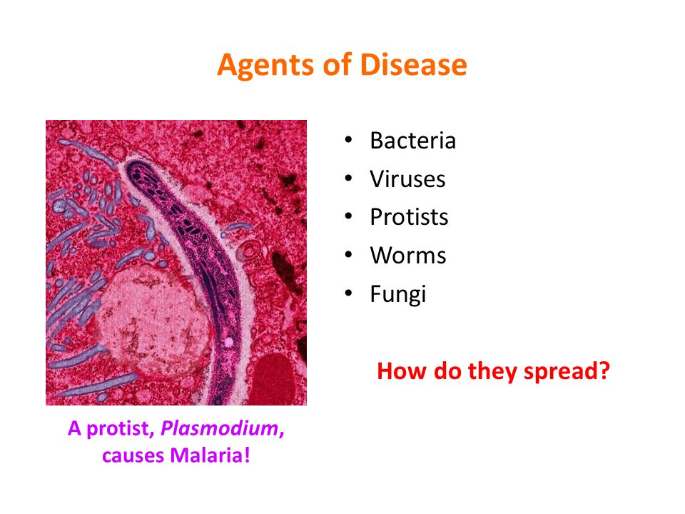a study on bacterial diseases