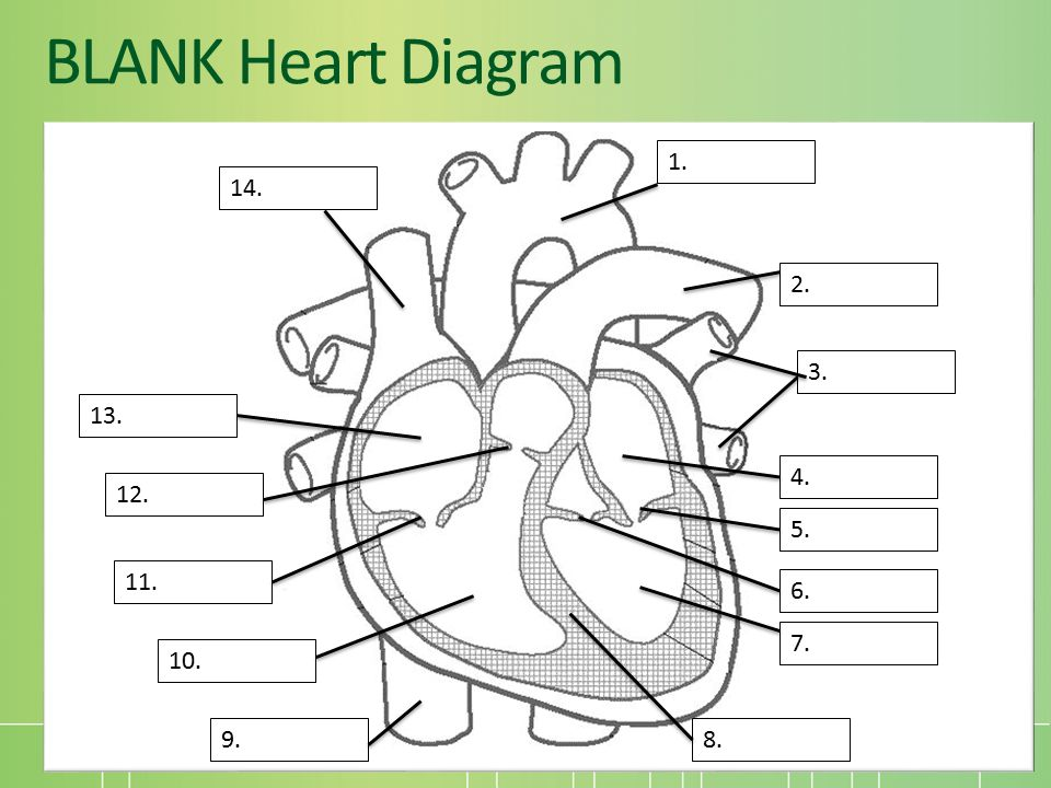 Unit 9 human body part 4 circulatory and respiratory systems mrs 33 blank heart diagram 1 2 13 3 14 9 4 6 7 8 10 11 12 5 ccuart Images