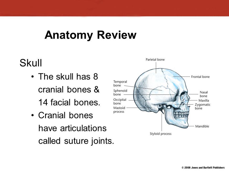 Chapter 9 Head And Neck Anatomy Choice Image - human body anatomy