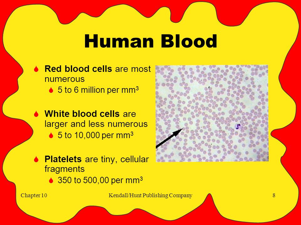 Chapter 10Kendall/Hunt Publishing Company8 Human Blood  Red blood cells are most numerous  5 to 6 million per mm 3  White blood cells are larger and less numerous  5 to 10,000 per mm 3  Platelets are tiny, cellular fragments  350 to 500,00 per mm 3