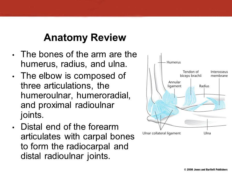 Elbow ligaments anatomy