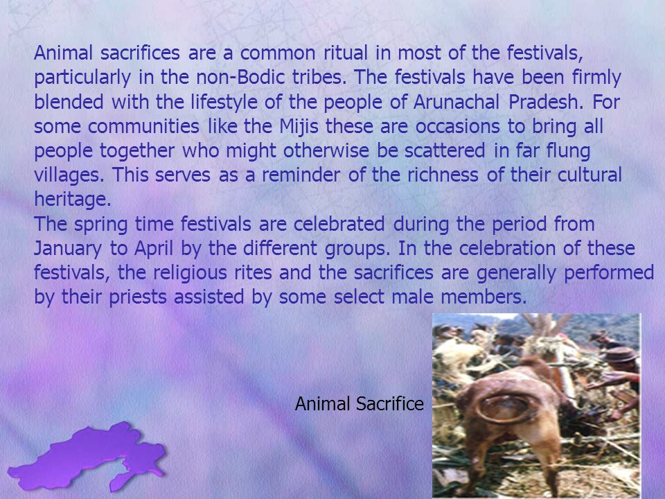 Animal sacrifices are a common ritual in most of the festivals, particularly in the non-Bodic tribes.