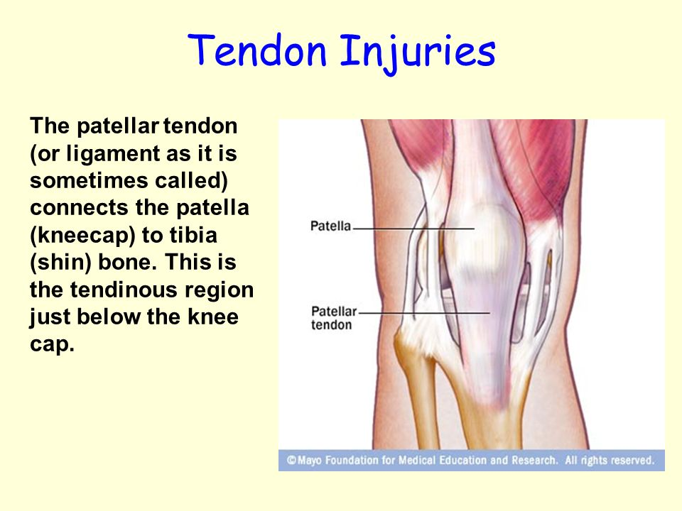 knees ligaments and tendons - Leon.escapers.co
