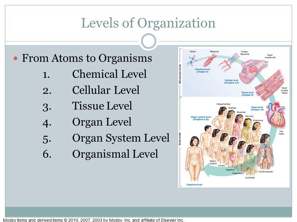 Excelente Anatomy And Physiology Courses Level 4 Fotos - Anatomía de ...