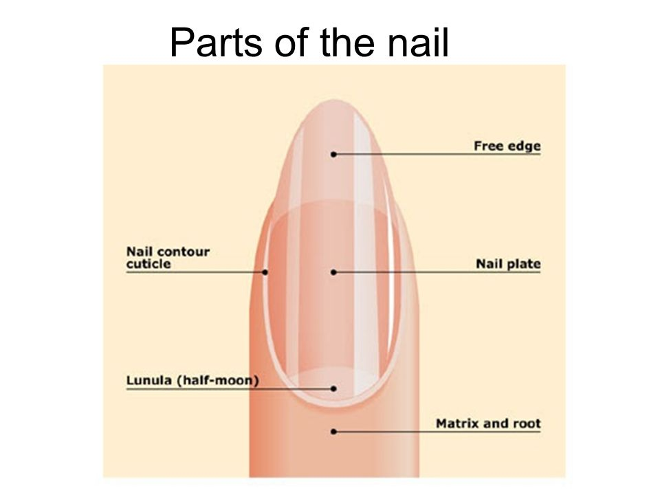 Manicure Nail Terms Objectives Explain Onychophagy And What Causes