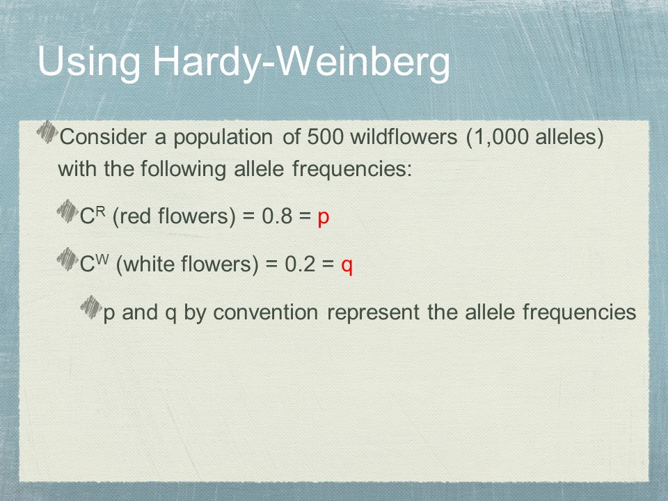 Consider a population of 500 wildflowers (1,000 alleles) with the following allele frequencies: C R (red flowers) = 0.8 = p C W (white flowers) = 0.2 = q p and q by convention represent the allele frequencies Using Hardy-Weinberg