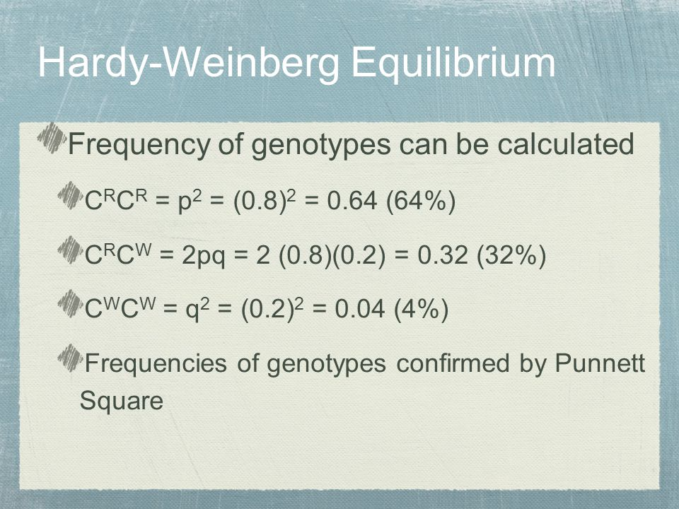 Frequency of genotypes can be calculated C R C R = p 2 = (0.8) 2 = 0.64 (64%) C R C W = 2pq = 2 (0.8)(0.2) = 0.32 (32%) C W C W = q 2 = (0.2) 2 = 0.04 (4%) Frequencies of genotypes confirmed by Punnett Square Hardy-Weinberg Equilibrium