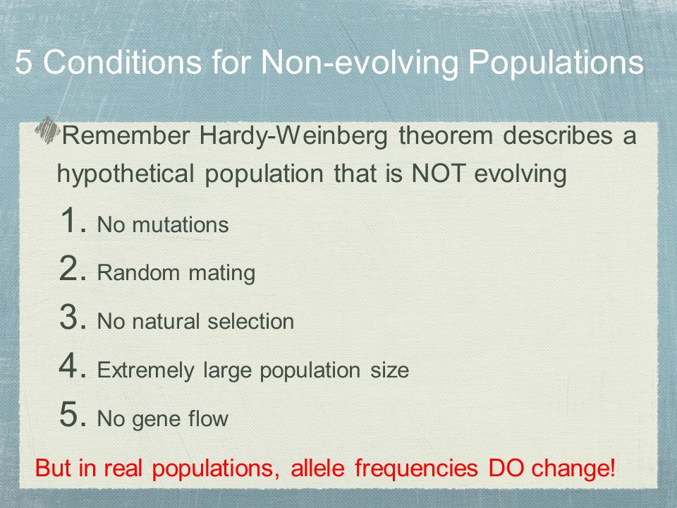 Remember Hardy-Weinberg theorem describes a hypothetical population that is NOT evolving 1.