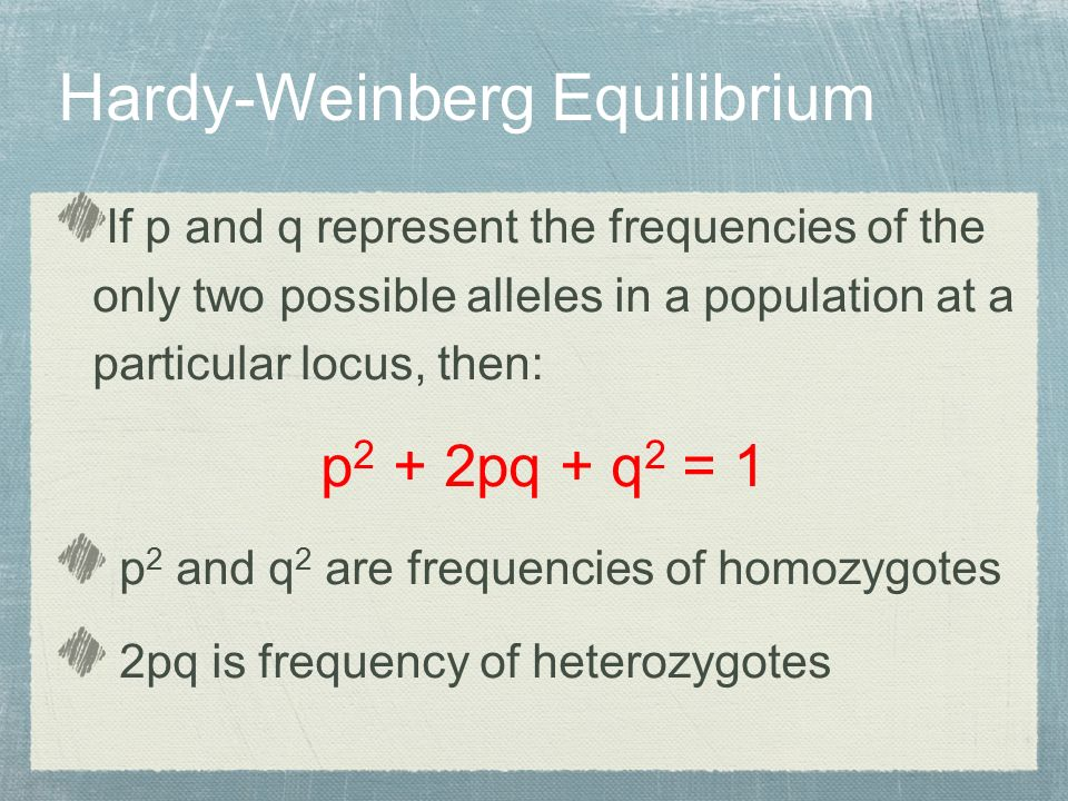 If p and q represent the frequencies of the only two possible alleles in a population at a particular locus, then: p 2 + 2pq + q 2 = 1 p 2 and q 2 are frequencies of homozygotes 2pq is frequency of heterozygotes Hardy-Weinberg Equilibrium