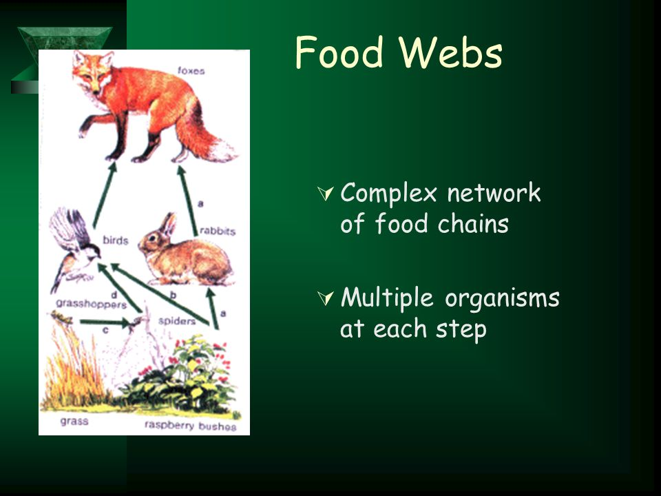 Food Webs  Complex network of food chains  Multiple organisms at each step