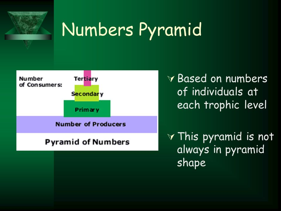 Numbers Pyramid  Based on numbers of individuals at each trophic level  This pyramid is not always in pyramid shape