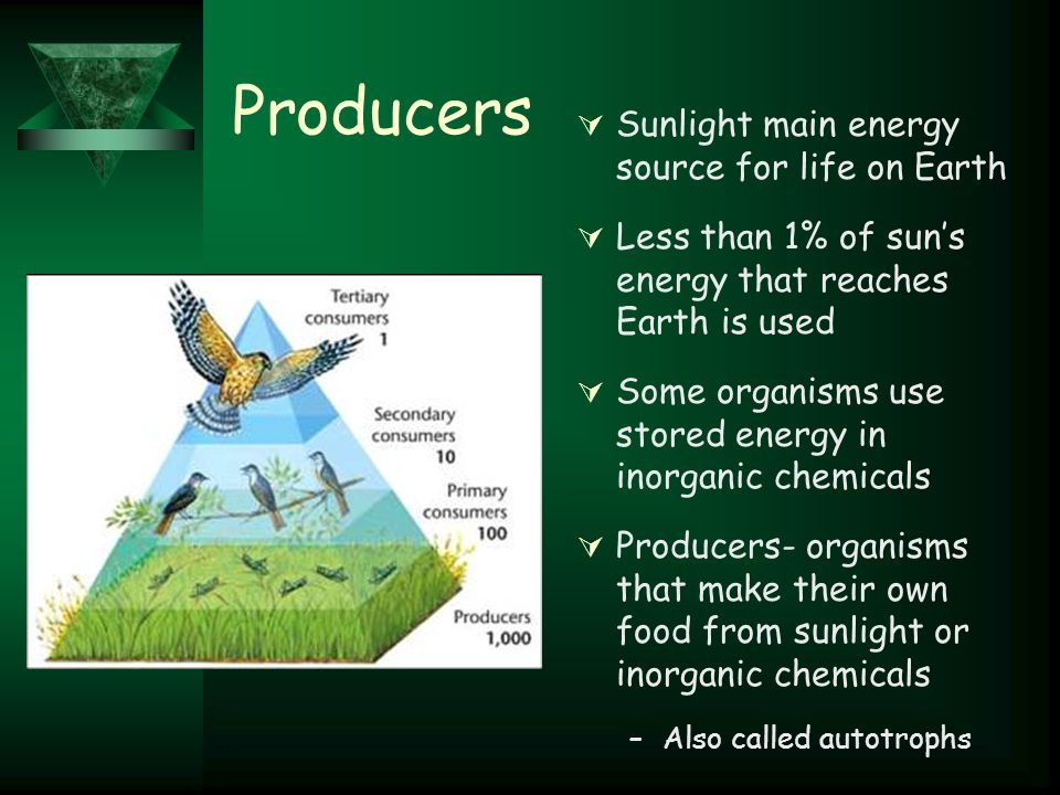 Producers  Sunlight main energy source for life on Earth  Less than 1% of sun's energy that reaches Earth is used  Some organisms use stored energy in inorganic chemicals  Producers- organisms that make their own food from sunlight or inorganic chemicals –Also called autotrophs