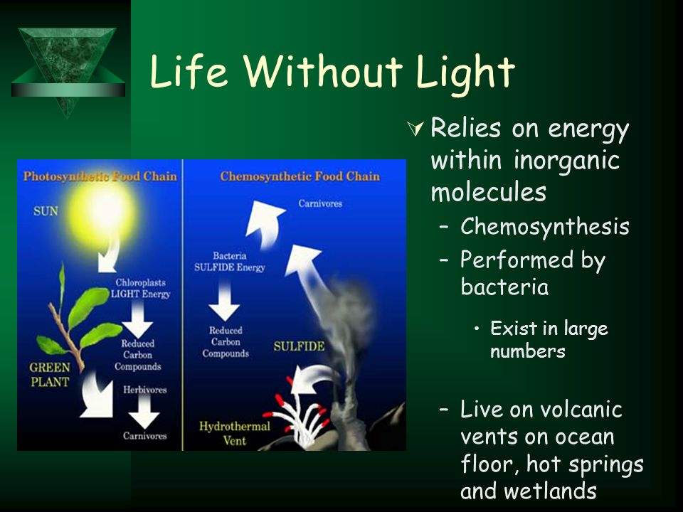 Life Without Light  Relies on energy within inorganic molecules –Chemosynthesis –Performed by bacteria Exist in large numbers –Live on volcanic vents on ocean floor, hot springs and wetlands