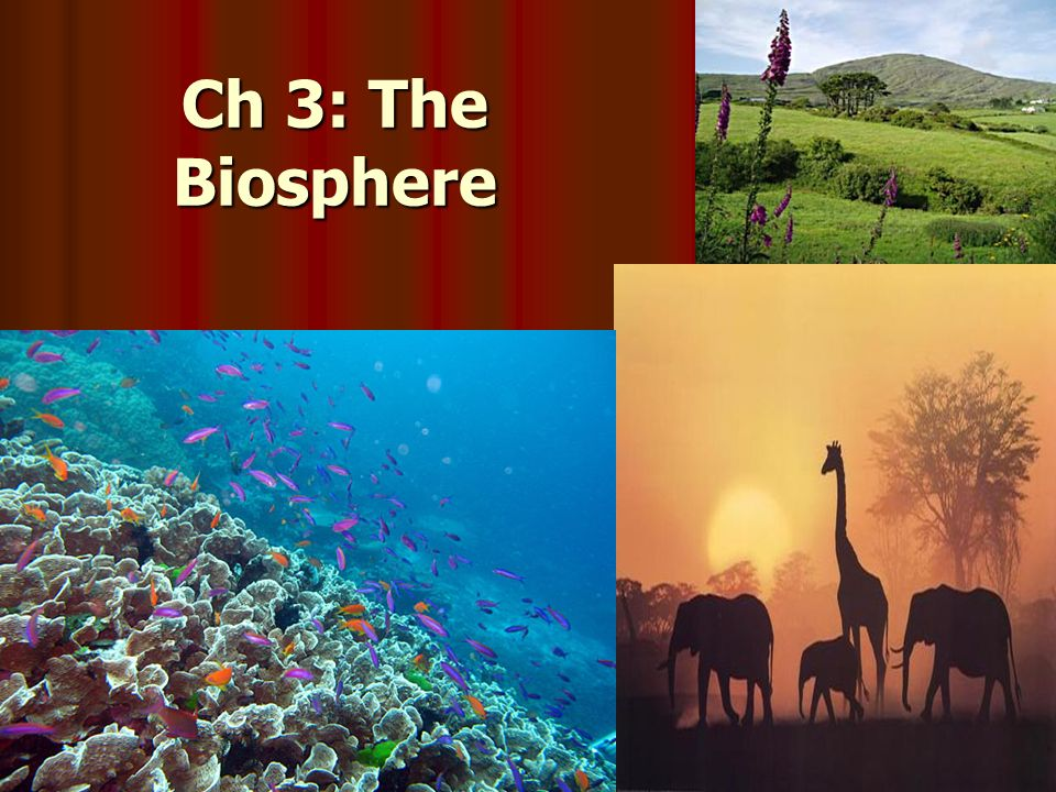 "understanding the part of the earth in which life still exists the biosphere Climate change for aliens earth's biosphere–the global layer where life exists–is unique in ""human beings are part of the biosphere so they need."