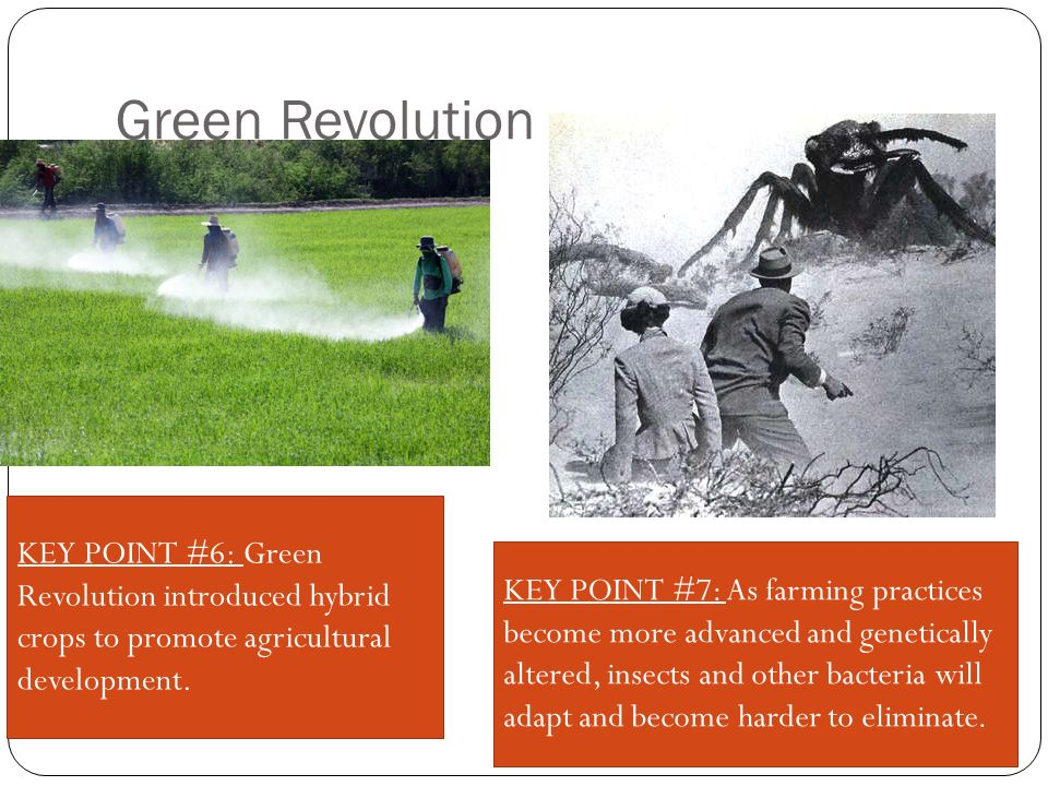 Green Revolution KEY POINT #7: As farming practices become more advanced and genetically altered, insects and other bacteria will adapt and become harder to eliminate.