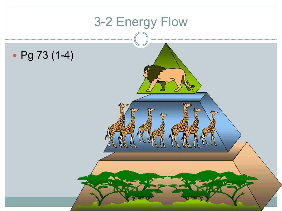 3-2 Energy Flow Pg 73 (1-4)