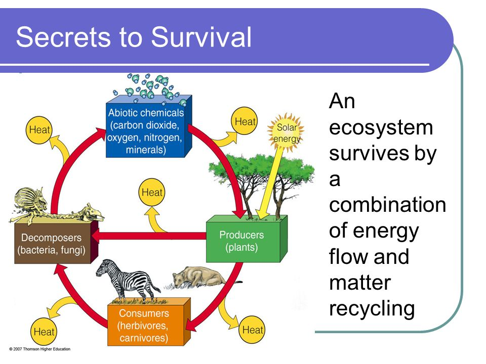 Secrets to Survival An ecosystem survives by a combination of energy flow and matter recycling