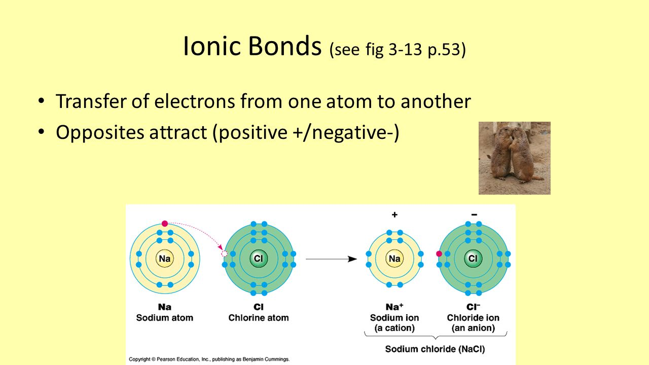 Ionic Bonds (see fig 3-13 p.53) Transfer of electrons from one atom to another Opposites attract (positive +/negative-)