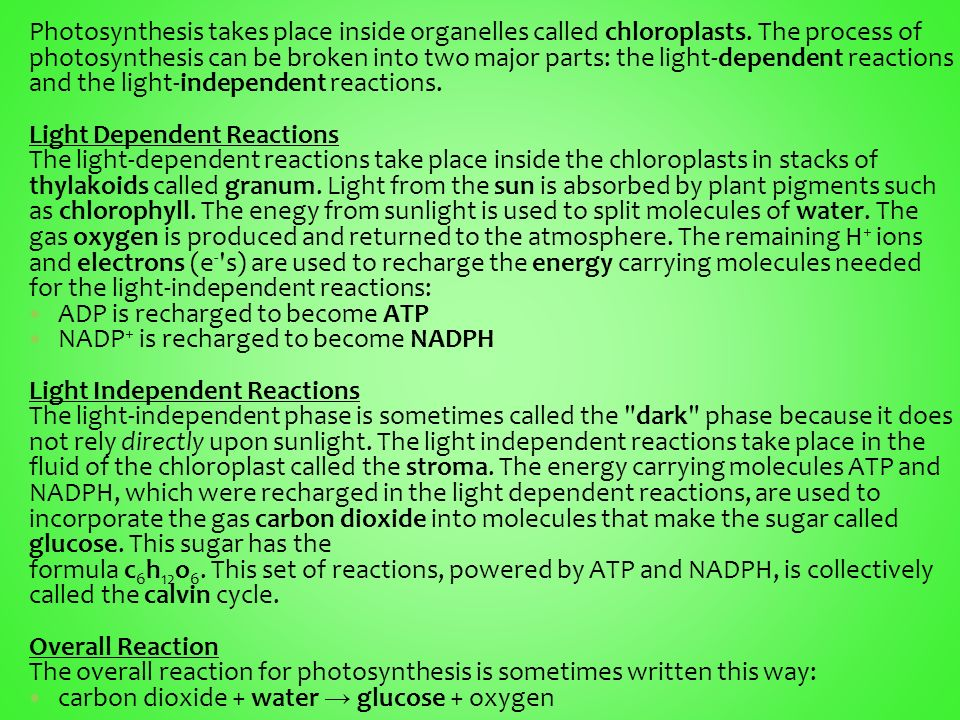 Takes Place Light Dependant Reactions Stroma E Why Are And Chlorophyll Needed For Photosynthesis Socratic