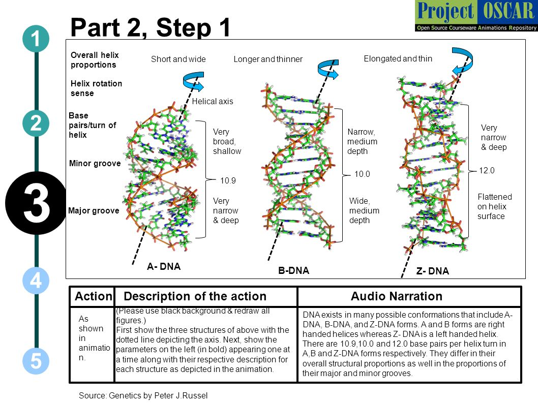facts on fossils and dna Remains of one of the most recently discovered early human species, homo floresiensis (nicknamed 'hobbit'), have so far only been found on the island of flores, indonesia the fossils of h floresiensis date to between about 100,000 and 60,000 years ago, and stone tools made by this species.