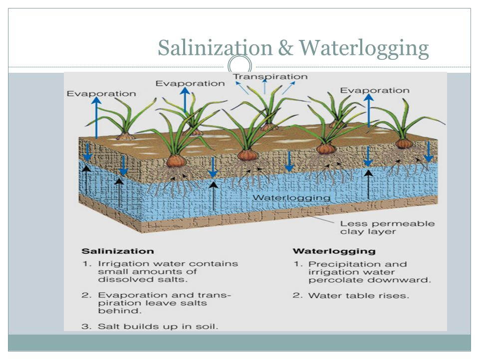 Salinization & Waterlogging