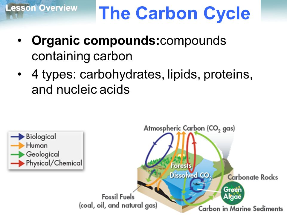 Lesson Overview Lesson Overview Cycles of Matter The Carbon Cycle Organic compounds:compounds containing carbon 4 types: carbohydrates, lipids, proteins, and nucleic acids