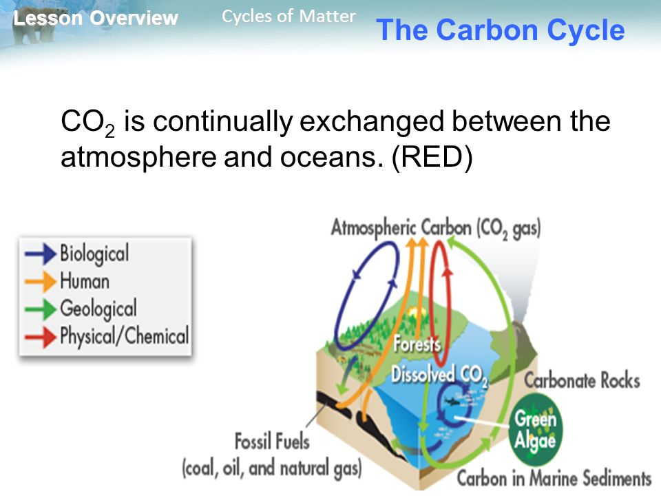 Lesson Overview Lesson Overview Cycles of Matter The Carbon Cycle CO 2 is continually exchanged between the atmosphere and oceans.