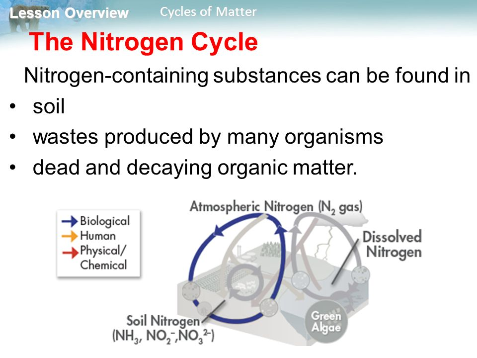 Lesson Overview Lesson Overview Cycles of Matter The Nitrogen Cycle Nitrogen-containing substances can be found in soil wastes produced by many organisms dead and decaying organic matter.