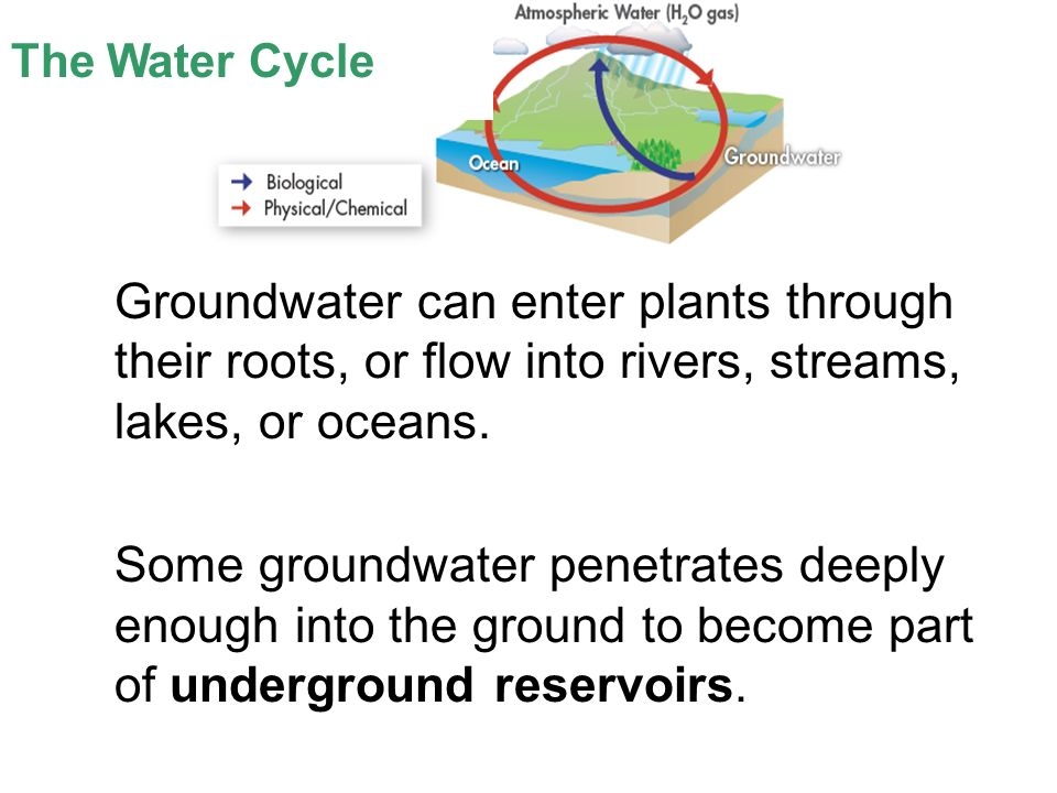 Lesson Overview Lesson Overview Cycles of Matter The Water Cycle Groundwater can enter plants through their roots, or flow into rivers, streams, lakes, or oceans.